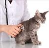 Ветеринарные клиники в Пушкинских Горах